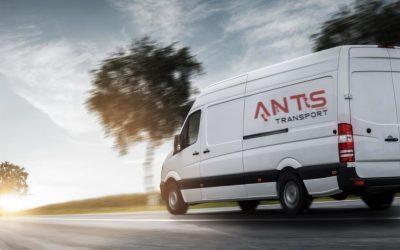 Ants 10