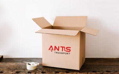 Ants 6